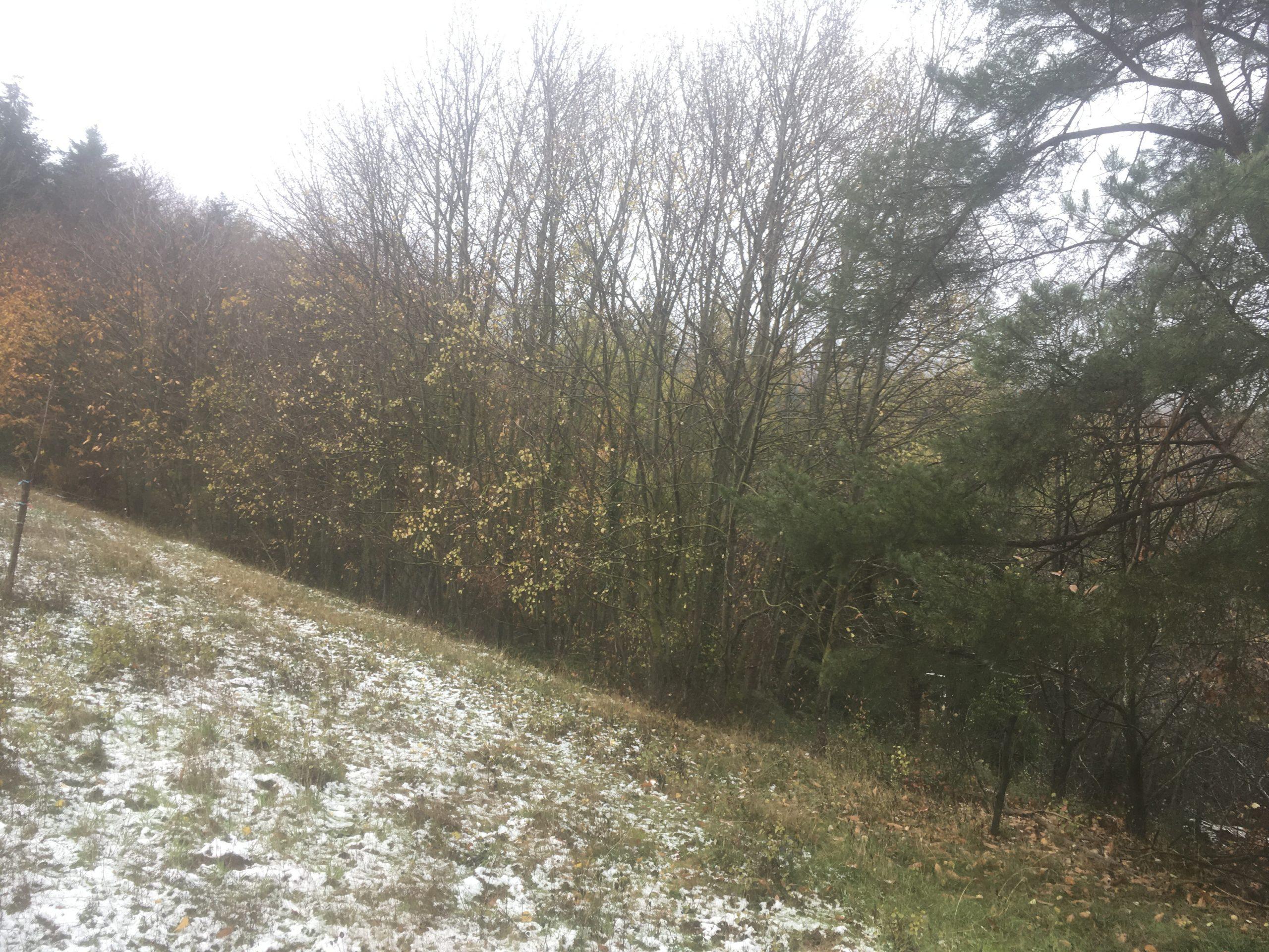 Weitere Pflegemaßnahmen im Naturschutzgebiet